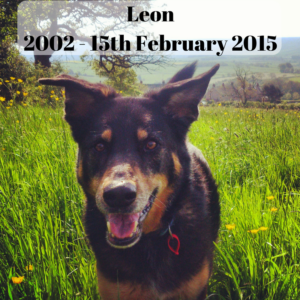 L.E.O.N: Leaving each one nutured
