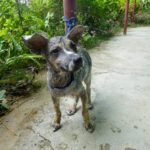 rescuing dog Philipinnes saving animals travel