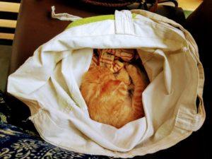 Rescuing kitten saving cats in Spain travels L.E.O.N