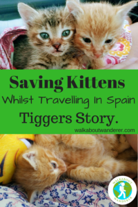 Saving Kittens whilst travelling in Spain: Tiggers Story by Walkabout Wanderer Keywords: rescuing animals travels travel blogger solo female traveller