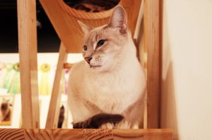 Free things to do in Coimbra Portugal tourist guide cat cafe