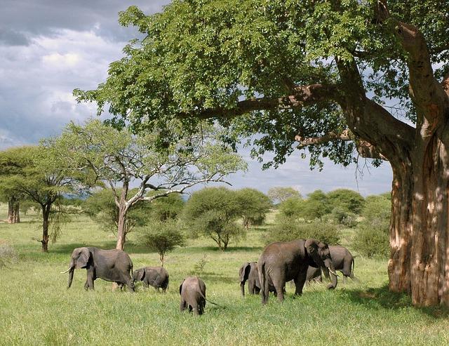 Best Natural Beauties In Tanzania