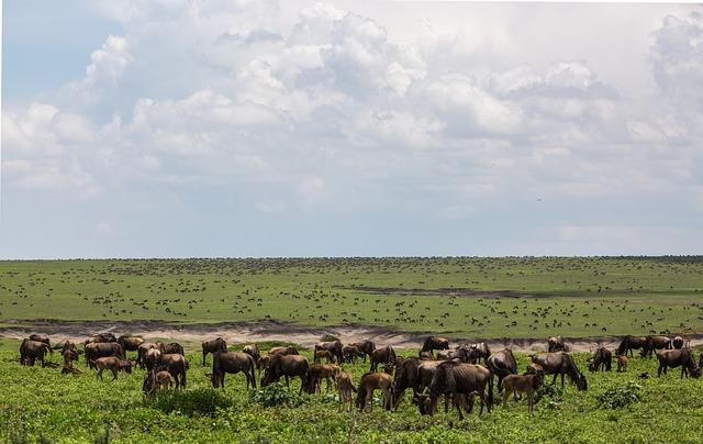 Best Natural Beauties In Tanzania ngorongoro conservation