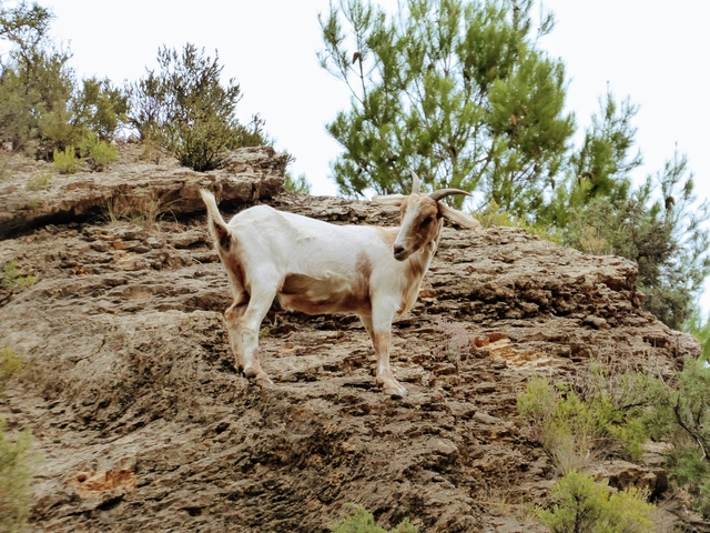 Wild goats Montanejos hot springs tour Valtournative Valencia spain